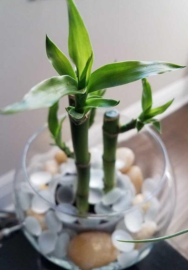 Bambuzinhos da sorte