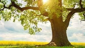 A Criatividade é o fruto ou a árvore?