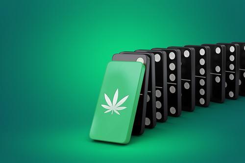 O efeito dominó na reclassificação da Cannabis pelaONU